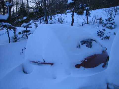 _in_snow